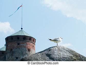 Seagull standing on a rock