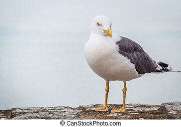 Seagull standing on a stone surface