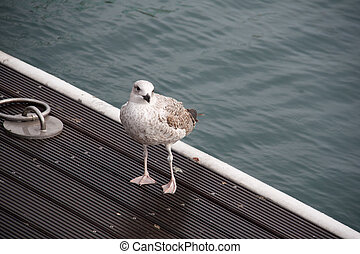 Seagull standing on a wooden pier