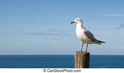 Seagull standing on a wooden post