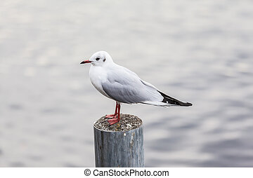Seagull standing on post