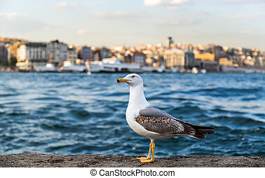 seagull standing on stone Cityscape of Golden horn with...