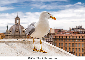Seagull standing on the walls of Vittoriano