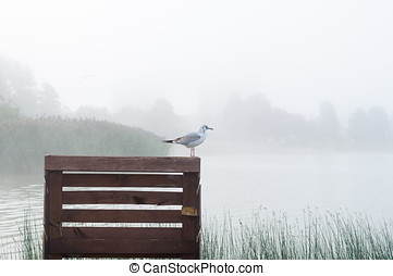 Seagull standing on wooden pier, sunrise mist over lake on background