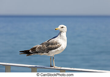 Seagull stands on the balustrade and looks around