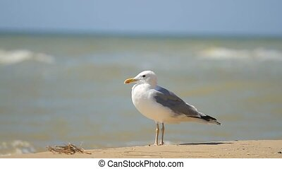 Seagull stands on the sand against the sea