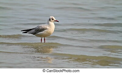 Seagull in the lake