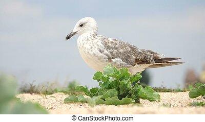 seagull on the coast of the sea