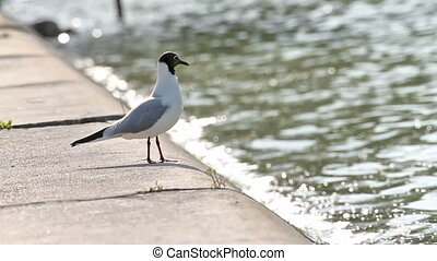 Seagull gracefully poses for a photo