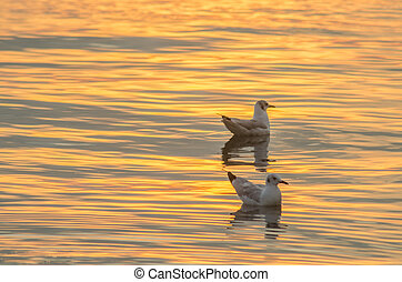 Seagull sunset background, on the sea