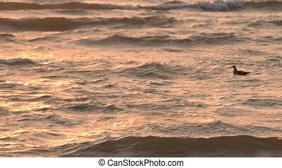 Seagull swimming on sea surface with waves