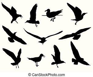 seagull, sylwetka, zbiór