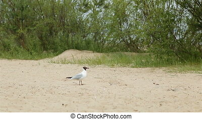 Seagull takes off from the sandy beach