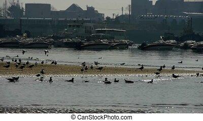 seagull taking a bath on sea, Yachts