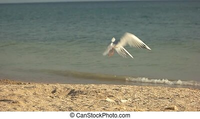 Seagull taking off. Bird on horizon background. Aspiration...