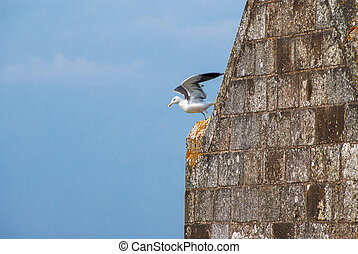 Seagull taking off from a steeple of mont Saint-Michel abbey