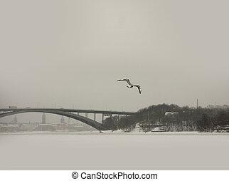 seagull, w, zima