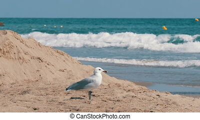 Seagull walking on sand by the sea shore with waves