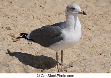 Seagull walking on wet sand beach