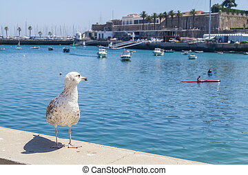 Seagull watching the Boats docked in a Marina in Cascais