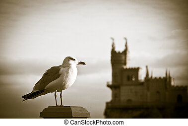 Seagull with castle on background - White&Black Seagull with...