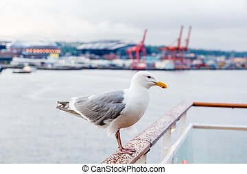 Seagull with Freight in Background