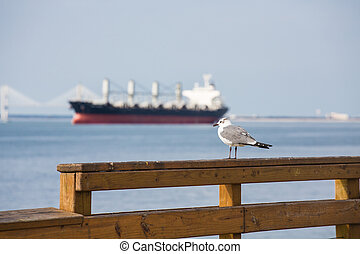 Seagull with Freighter in Background