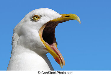 Seagull with its mouth wide open.