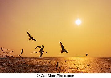 Seagull with sunset on the sea at Bangpu, Thailand