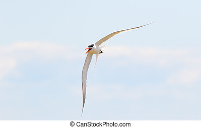 Seagull with wings spread against a light blue sky