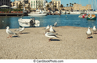 Seagulls against old fishing boats in Bari, Italy - Old ...