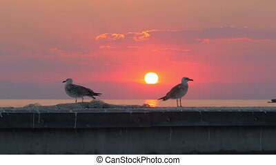 Seagulls against sea and sunset background - Slow motion...