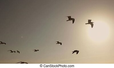 Seagulls And Birds Flying In Group - Flock of Seagulls And...