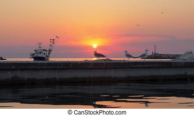Seagulls and boat in the sea, sunset marine scene - Slow...
