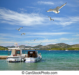 Seagulls and boats in Nature park Telascica. Dugi Otok island, Croatia.
