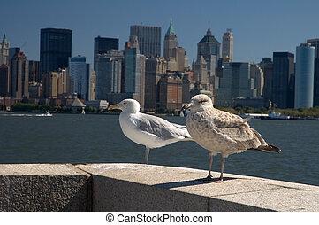 seagulls and manhattan