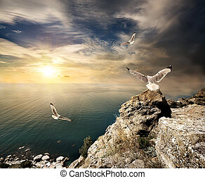Seagulls and sunset - Three seagulls over the sea and...