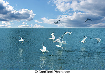 Seagulls and water - Flying seagulls on a sunny day at the...