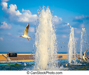 Seagulls and Water Fountains