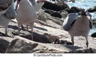 Seagulls are feeding on rocks near the sea