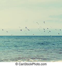 Seagulls are flying over ocean