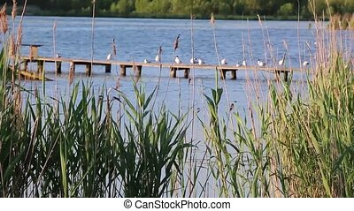 seagulls are sitting on the old dock - Wind over the lake in...