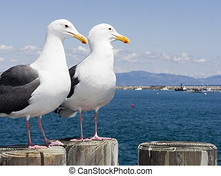 Seagulls at King Harbor Pier, CA