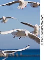 seagulls at pier