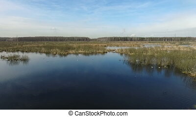 Seagulls at spring bog - aerial view HD