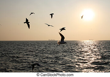 Seagulls at sunset - Seagulls flying over the sea at sunset