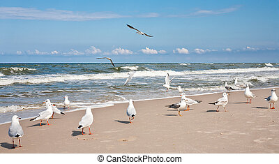 Seagulls at the Baltic sea.