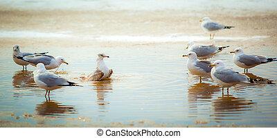 Seagulls at the sea