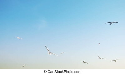 Seagulls Bird Flying