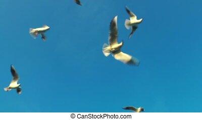 Seagulls Bird